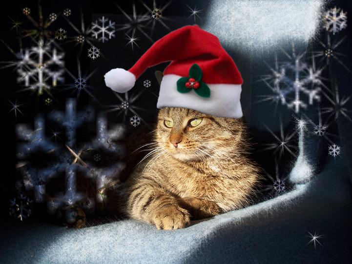 weihnachtsmieze_2004